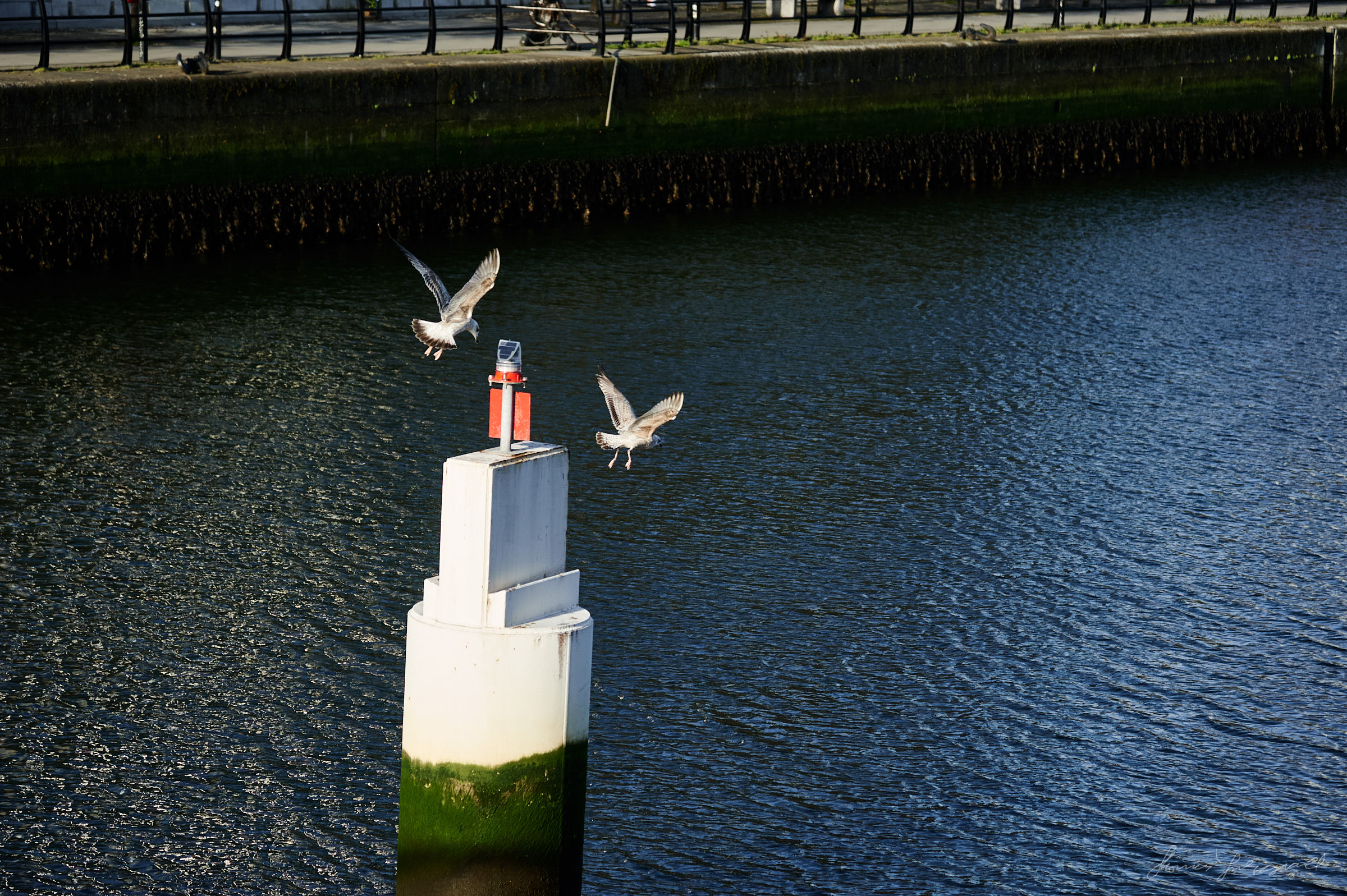 Seagulls on a post in the river