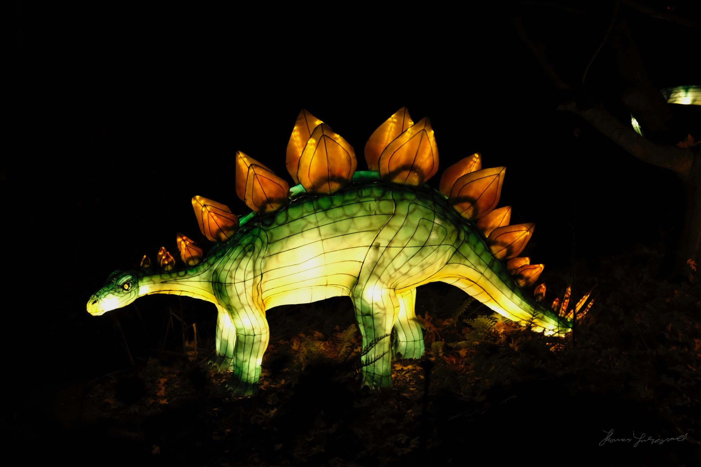 Wild-Lights-Dublin-Zoo-065.jpg