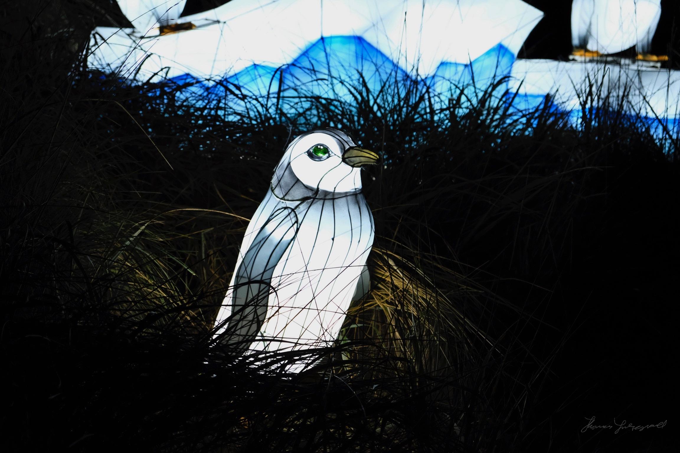 Wild-Lights-Dublin-Zoo-071.jpg