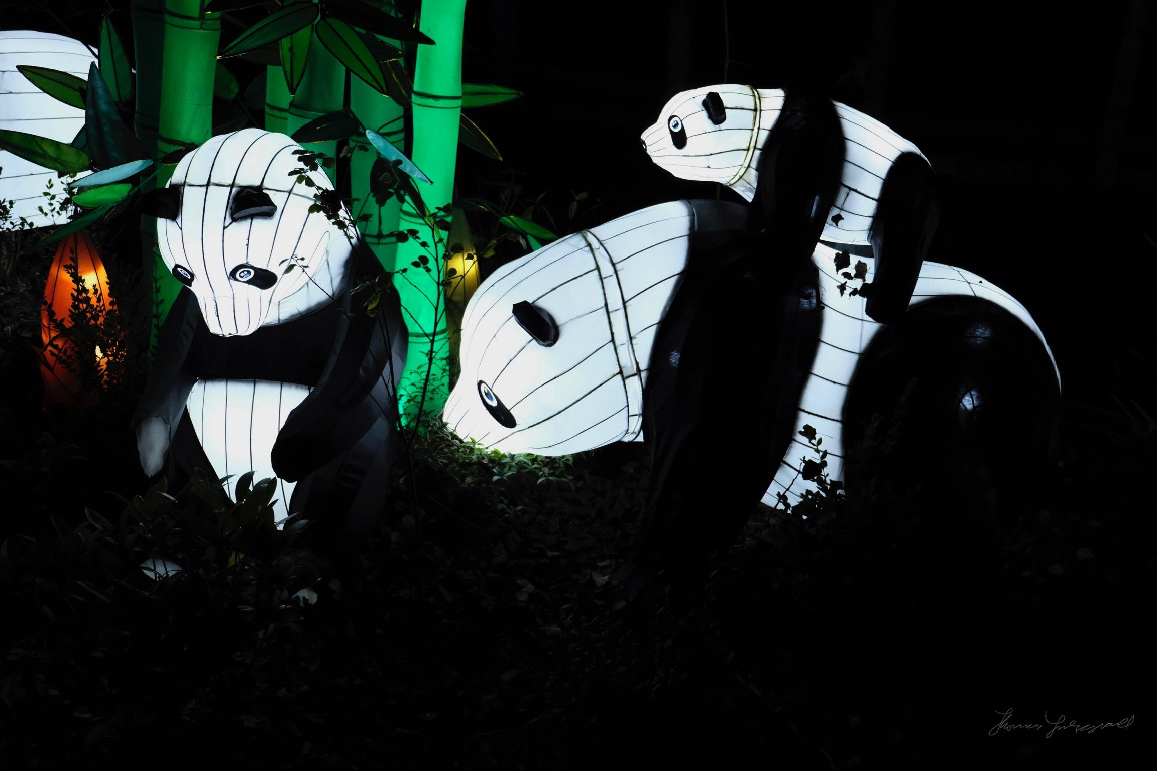 Wild-Lights-Dublin-Zoo-007.jpg