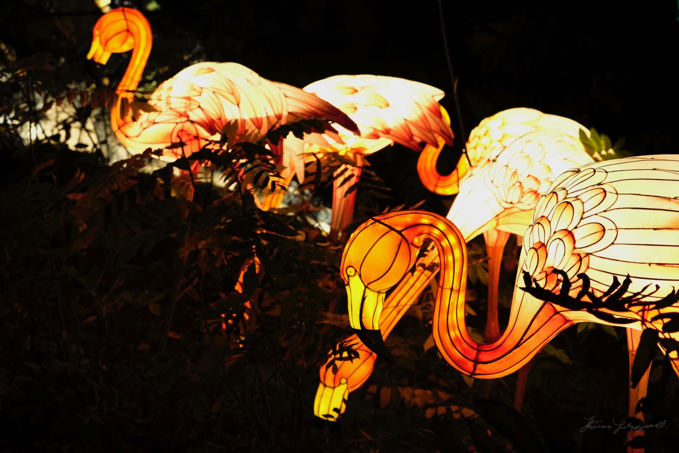 Wild-Lights-Dublin-Zoo-012.jpg