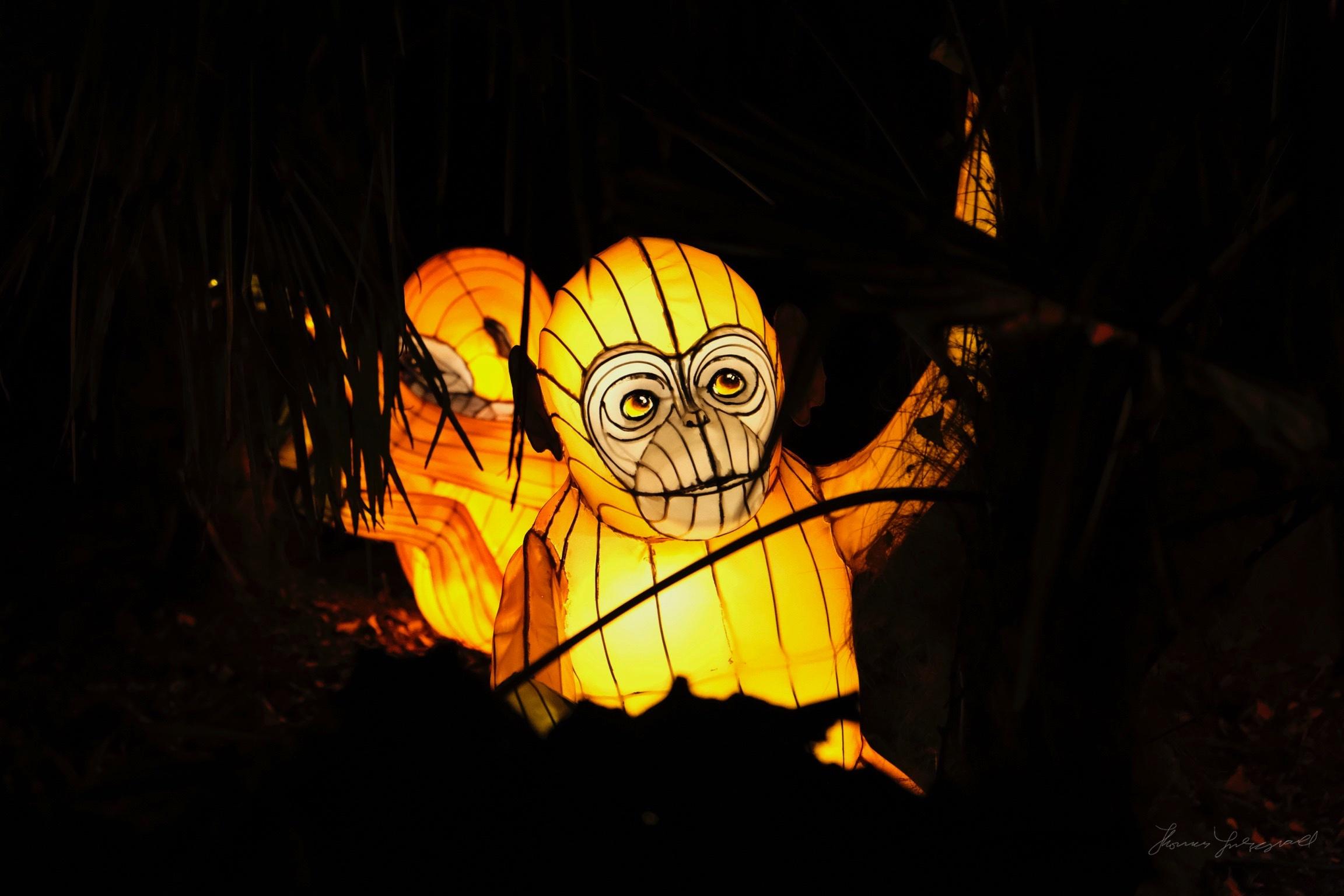 Wild-Lights-Dublin-Zoo-032.jpg