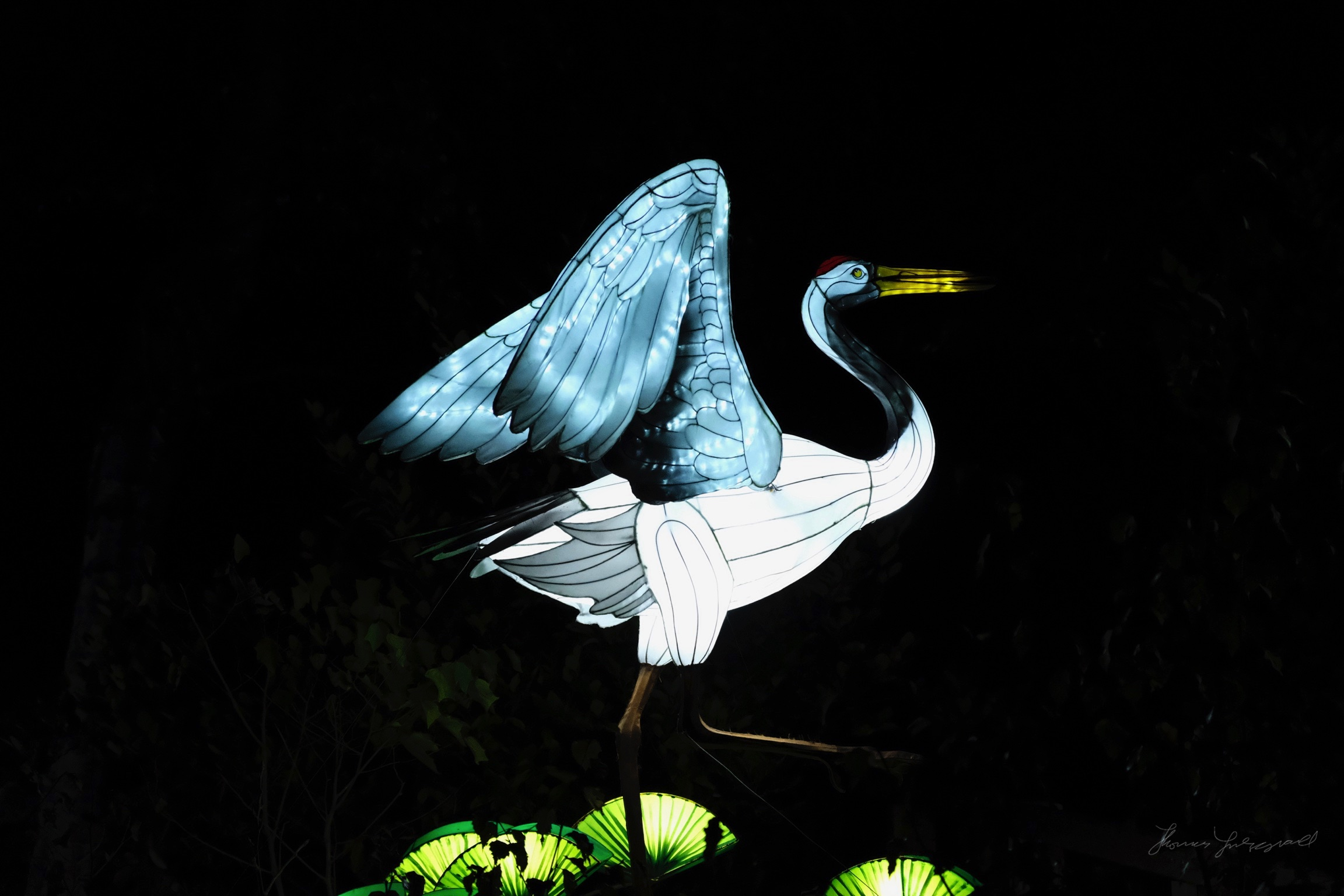 Wild-Lights-Dublin-Zoo-049.jpg