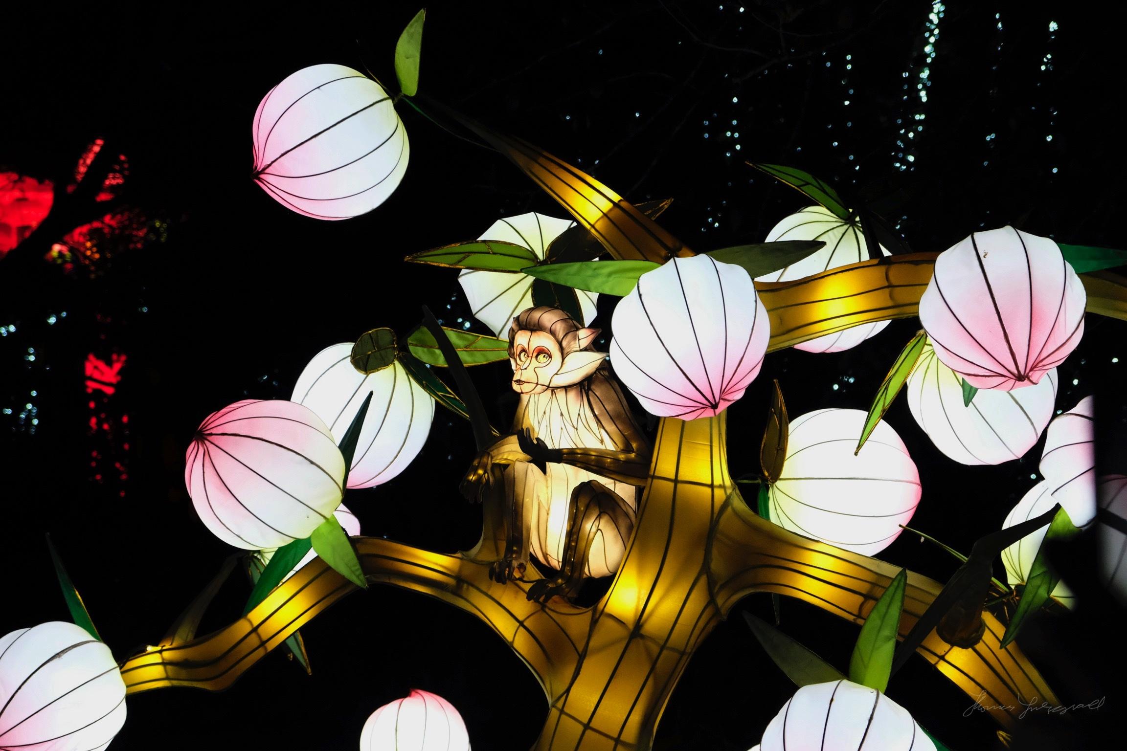 Wild-Lights-Dublin-Zoo-041.jpg