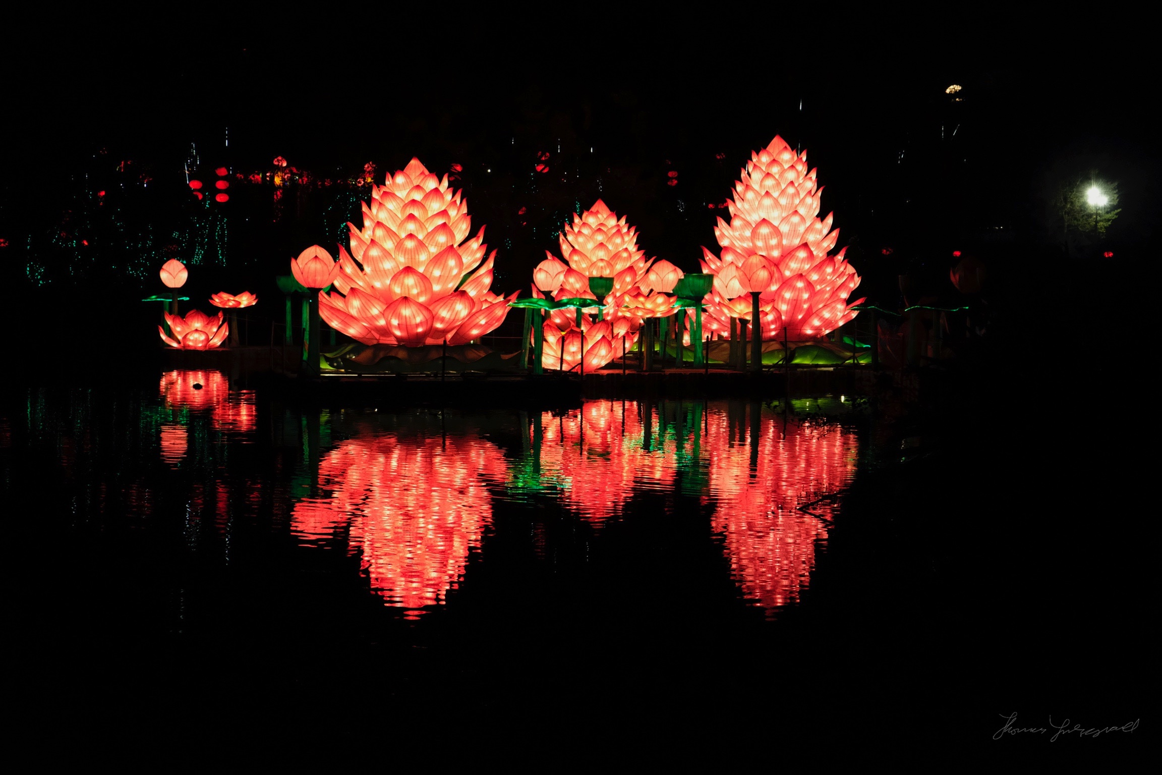Wild-Lights-Dublin-Zoo-009.jpg
