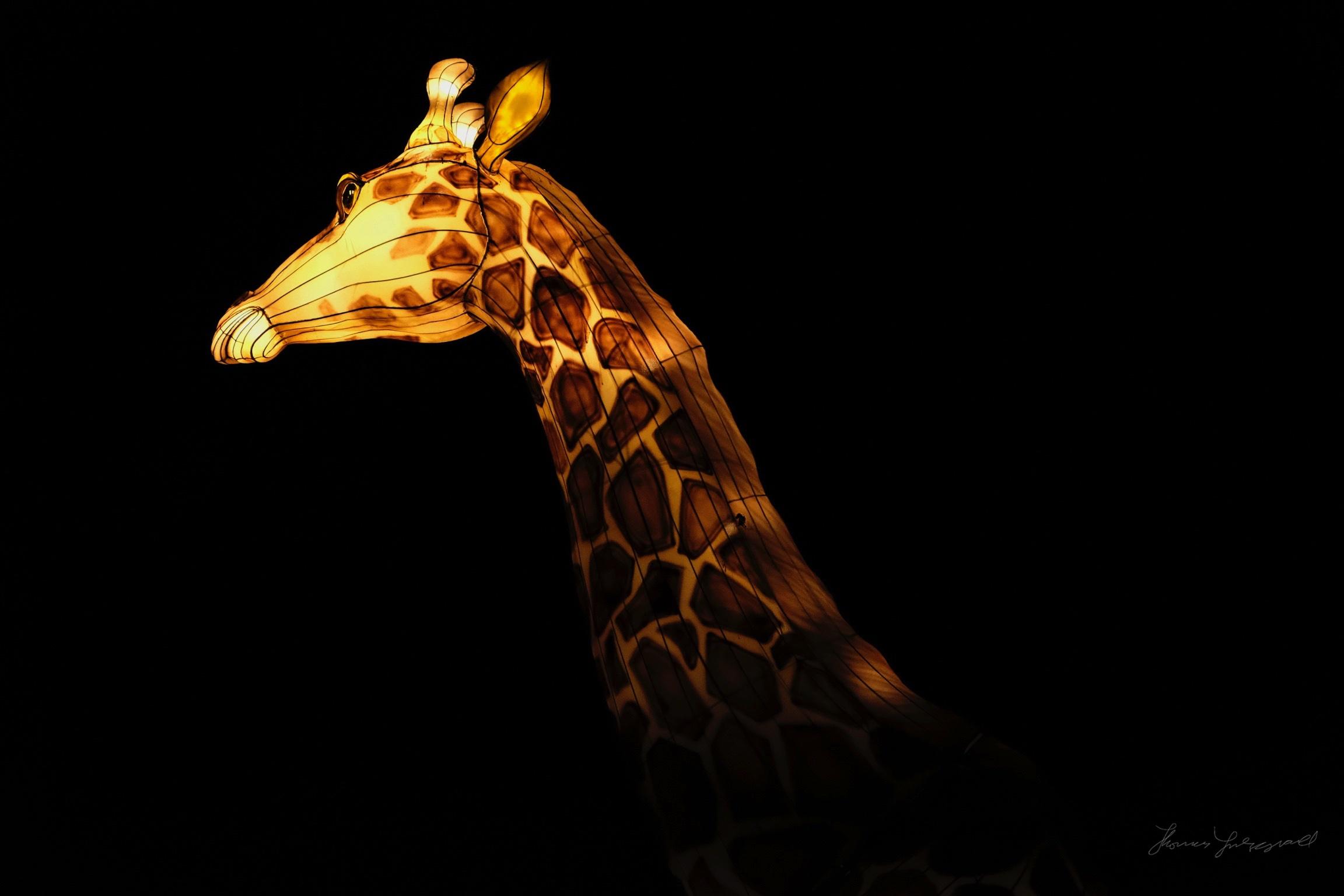 Wild-Lights-Dublin-Zoo-096.jpg