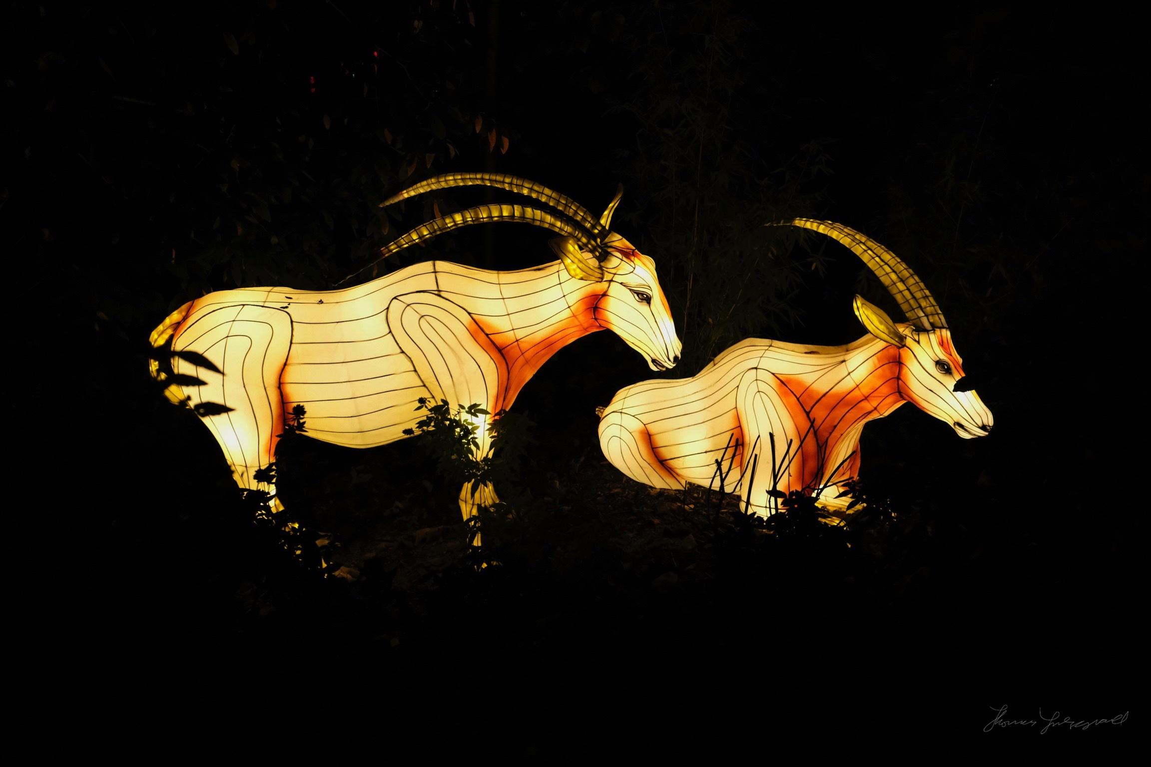 Wild-Lights-Dublin-Zoo-018.jpg