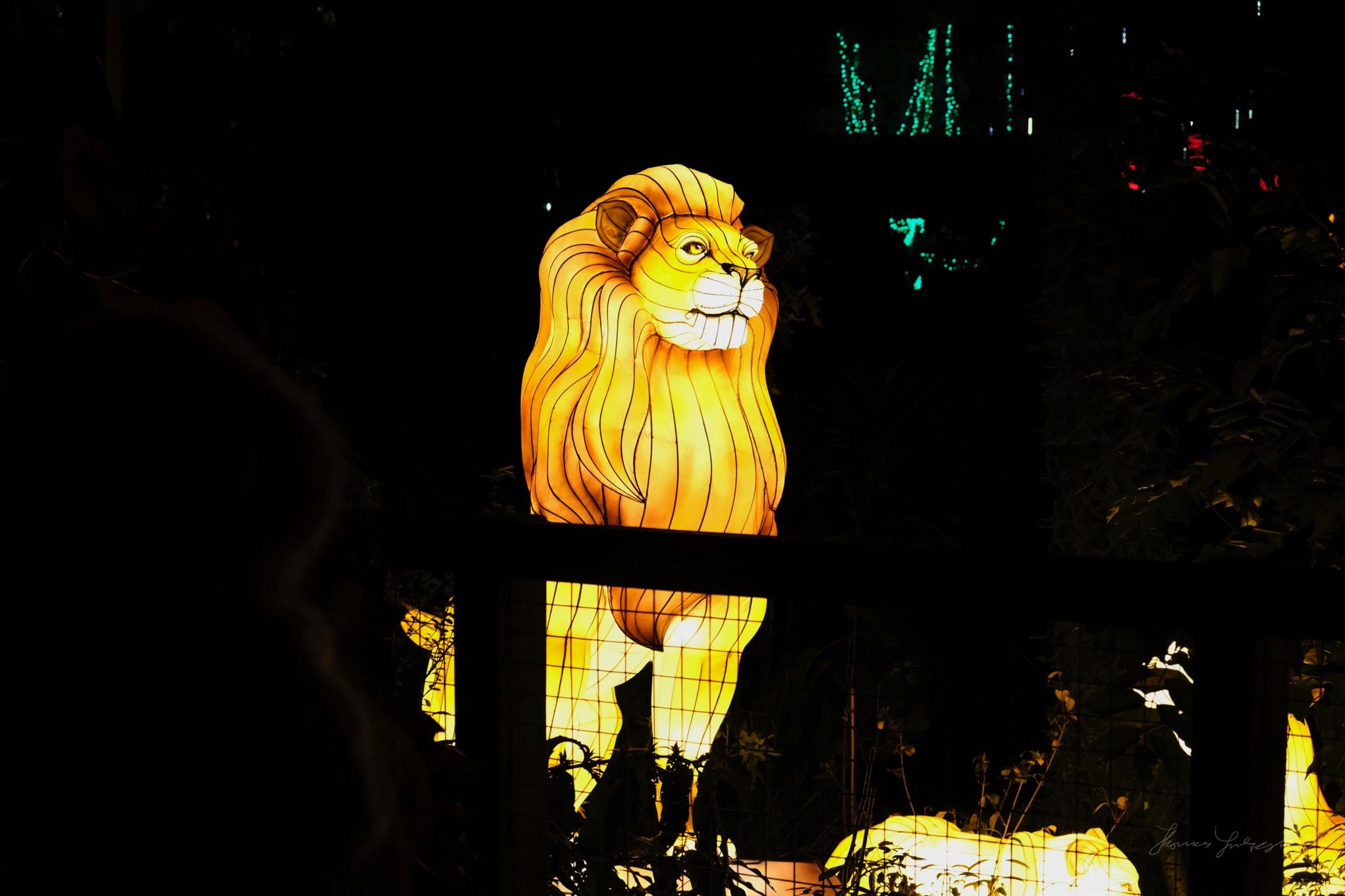Wild-Lights-Dublin-Zoo-003.jpg