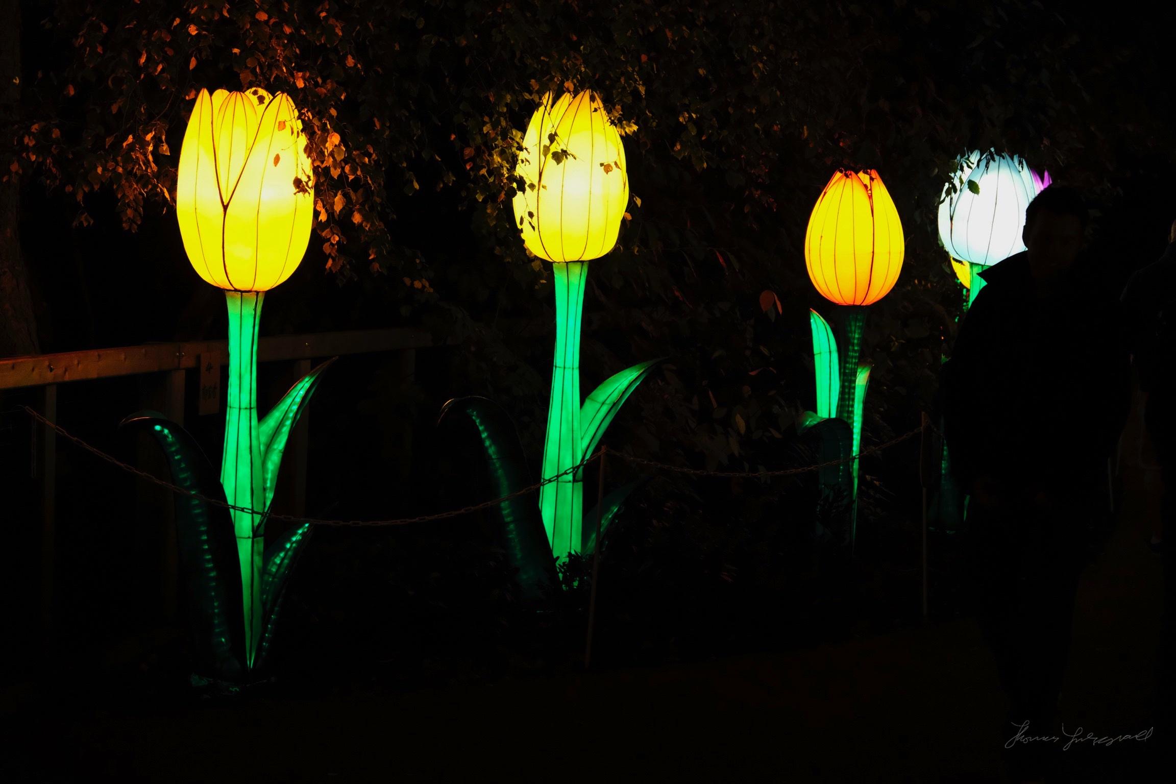 Wild-Lights-Dublin-Zoo-079.jpg