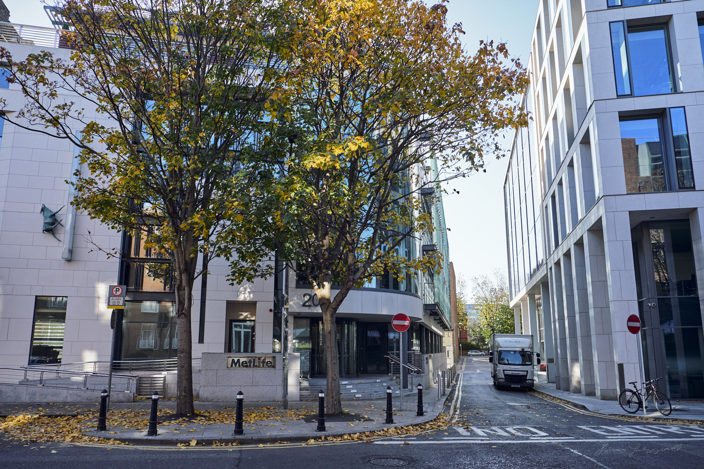 Autumn Leaves and Autumn Sunshine in Dublin City