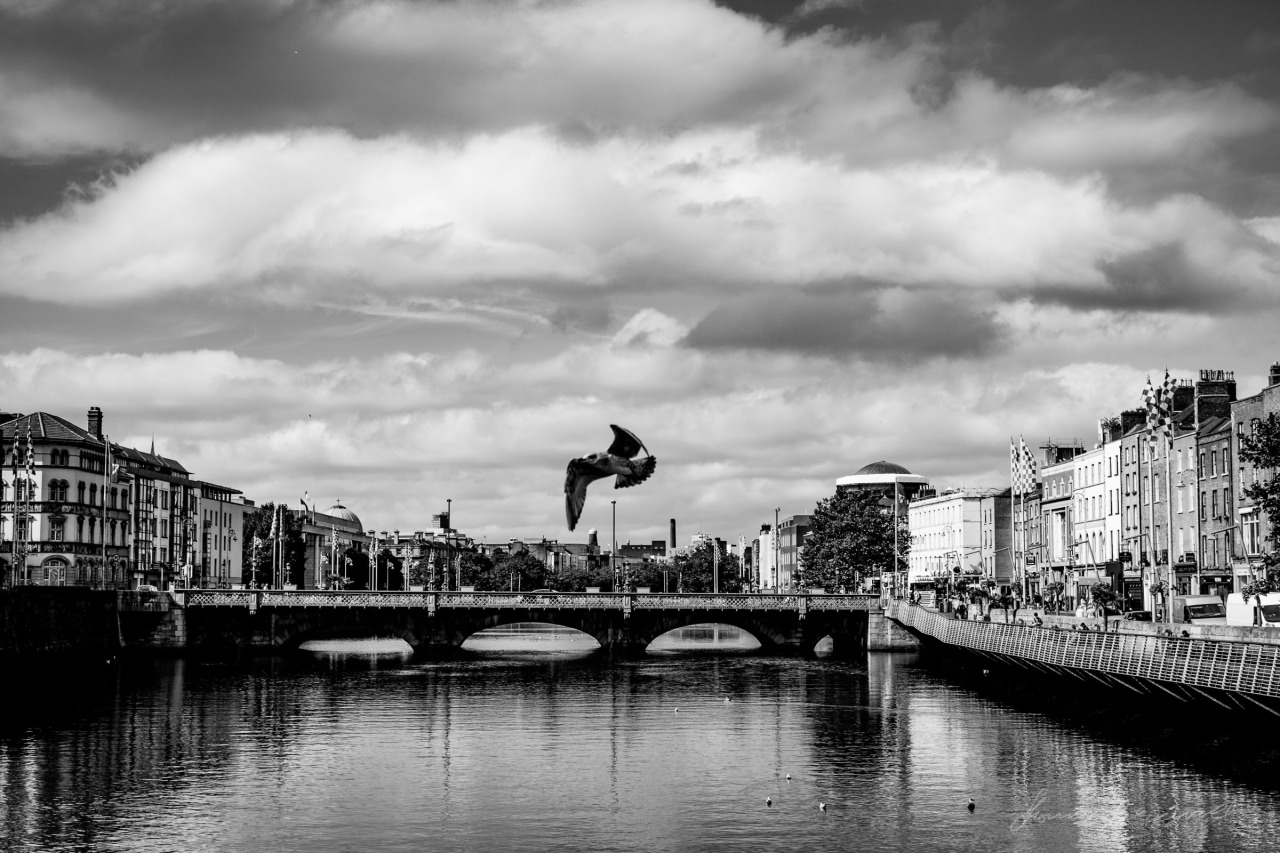 A Liffey fly by
