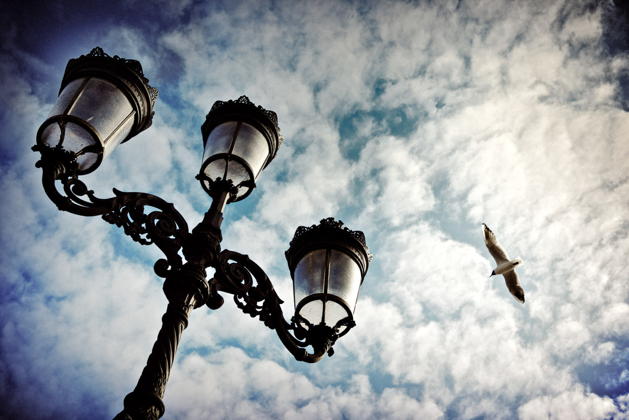 A seagull flying over one of Dublin's iconic lamp posts on O'Connell bridge