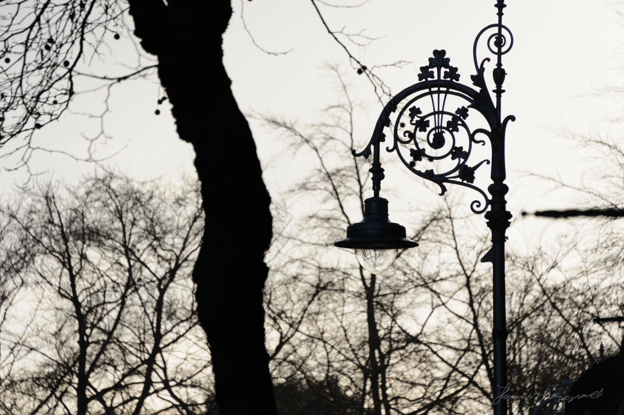 Dublin B&W: Lamp post with shamrocks and trees without leaves