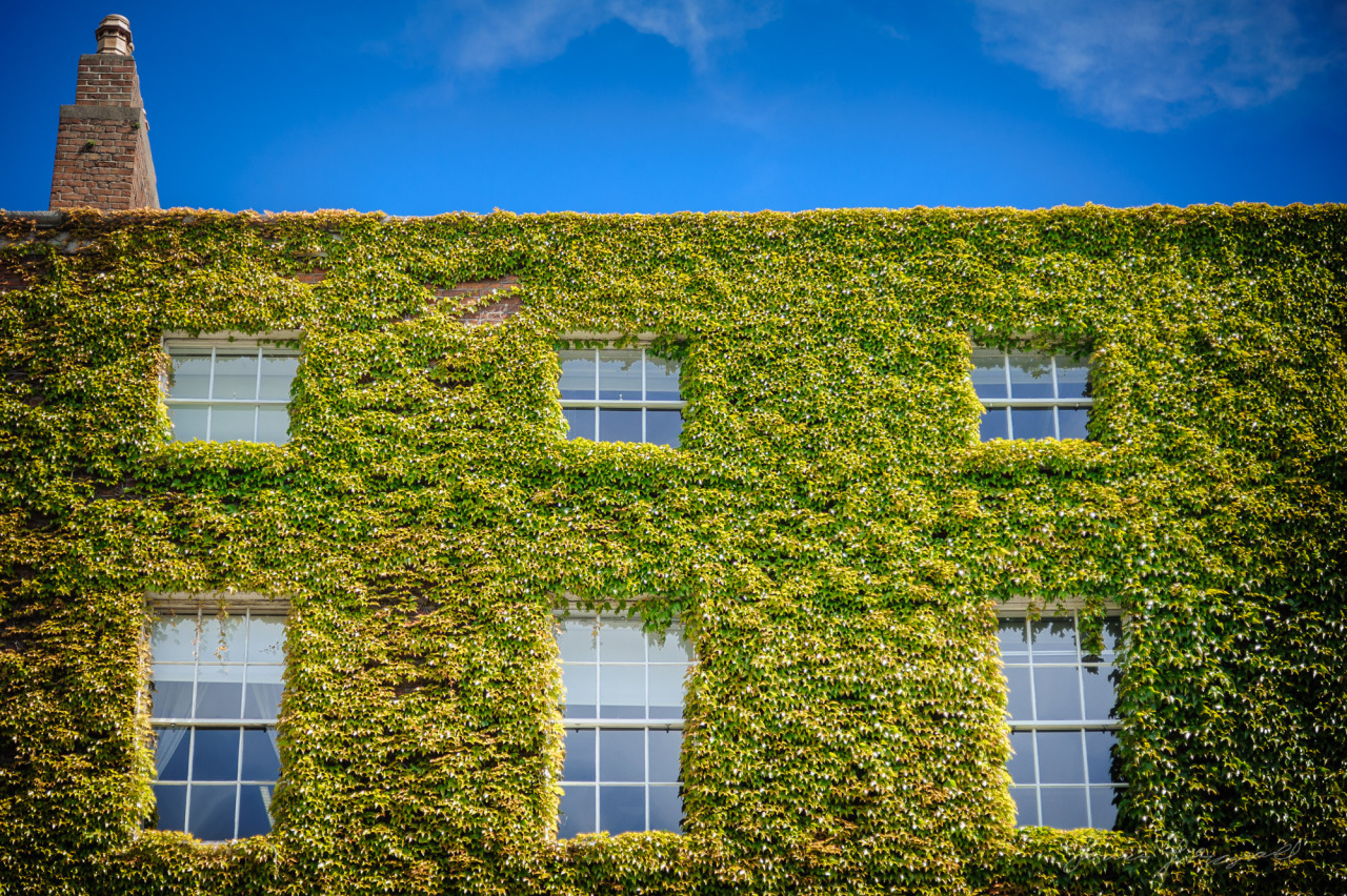 Ivy Covered Building on Stephen's Green