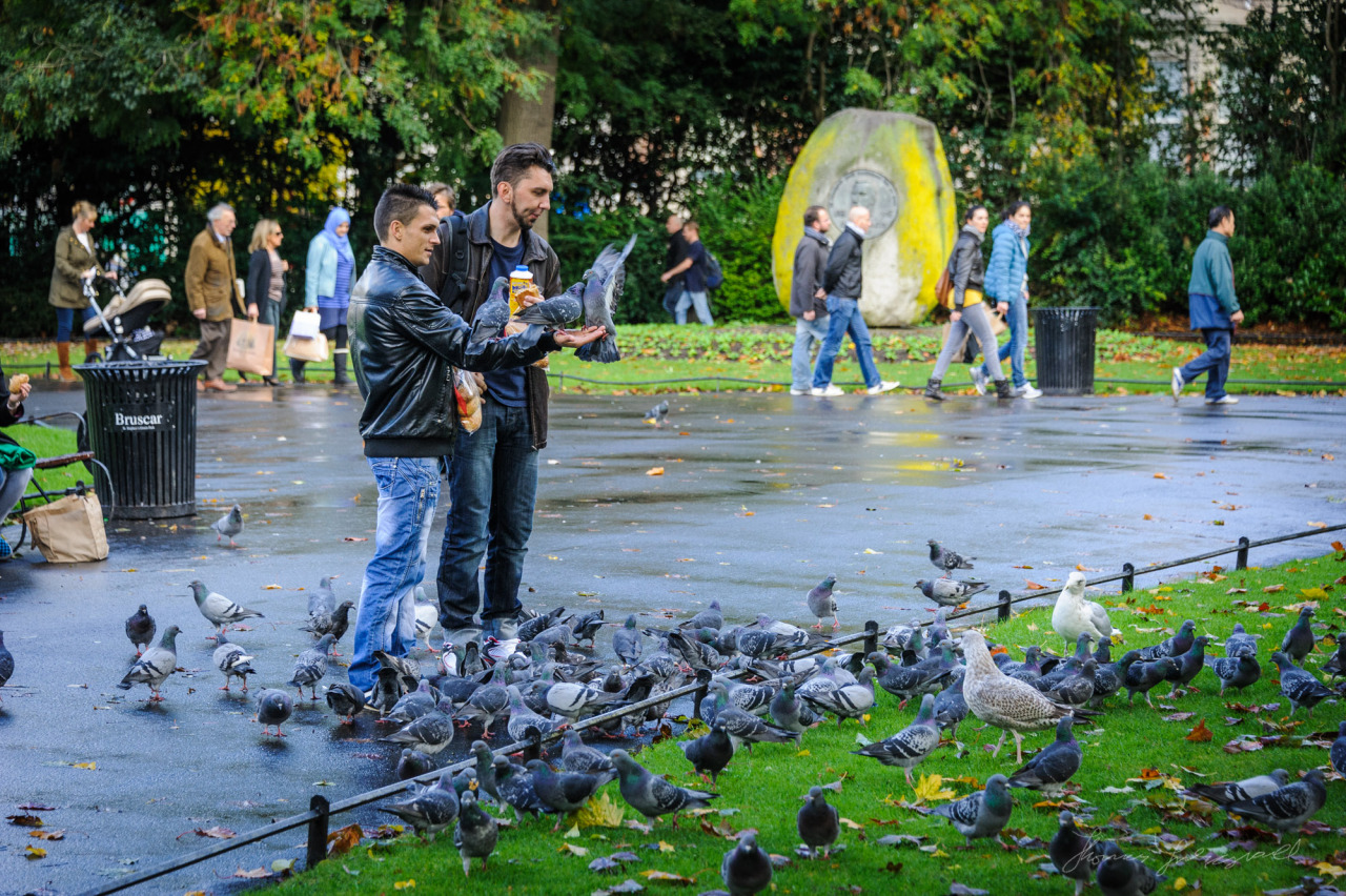 People feeding the pigeons in Stephen's Green