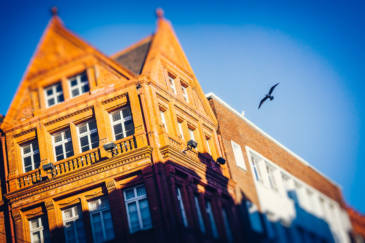 The Guardian of Grafton Street A Faux tilt shift image of a seagull circling over the buildings of Grafton Street