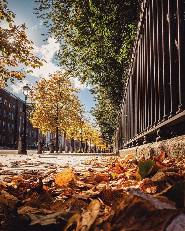 An autumn day by Stephens Green  #autumn #autumncolors #fall #fallcolors #discoverdublin #visitireland #visitdublin #documentdublin #dublin #dublinstreets #visitireland #visitdublin #lovedublin #lovindublin #loveireland #cityscape #streetsofdublin