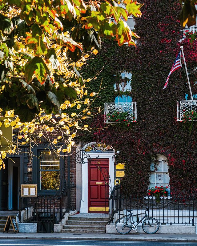 The ivy covered facade of the Boston College in Dublin @bostoncollegedublin  #autumn #autumncolour #fallcolor #discoverdublin #visitireland #visitdublin #documentdublin #dublin #dublinstreets #visitireland #visitdublin #lovedublin #lovindublin #loveireland #cityscape #streetsofdublin