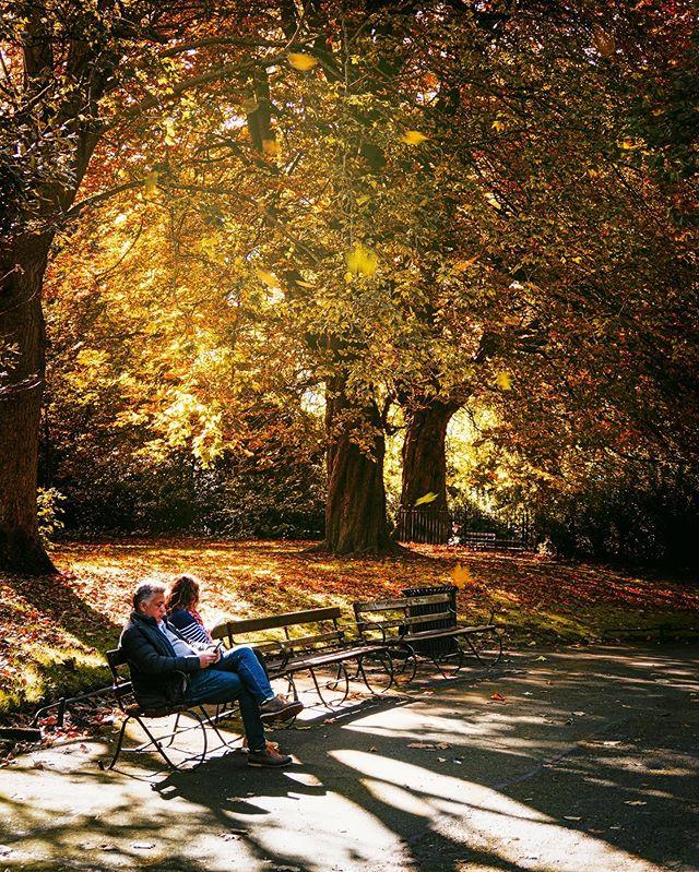 An autumn scene on Stephens Green!  #autumn #autumncolour #fall #fallcolors #falltrees #discoverdublin #visitireland #visitdublin #documentdublin #dublin #dublinstreets #visitireland #visitdublin #lovedublin #lovindublin #loveireland #cityscape #streetsofdublin