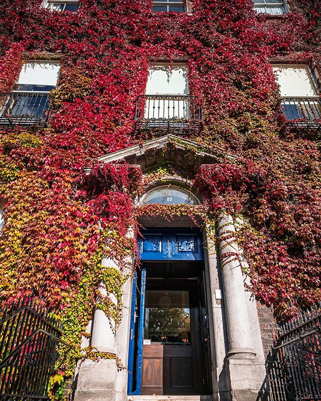 Georgian doors and Autumn Ivy !  #autumn #autumncolour #fall #fallcolor #ivy #georgiandublin #georgiandoorsofdublin #discoverdublin #visitireland #visitdublin #documentdublin #dublin #dublinstreets #visitireland #visitdublin #lovedublin #lovindublin #loveireland #cityscape #streetsofdublin