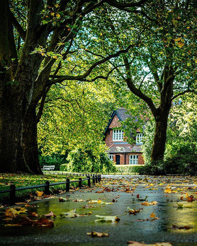Autumn in Stephen's Green  #autumn #autumnvibes🍁 #autumncolors🍁 #autumncolours #fall #fallcolour #discoverdublin #visitireland #visitdublin #documentdublin #dublin #dublinstreets #visitireland #visitdublin #lovedublin #lovindublin #loveireland #cityscape #streetsofdublin