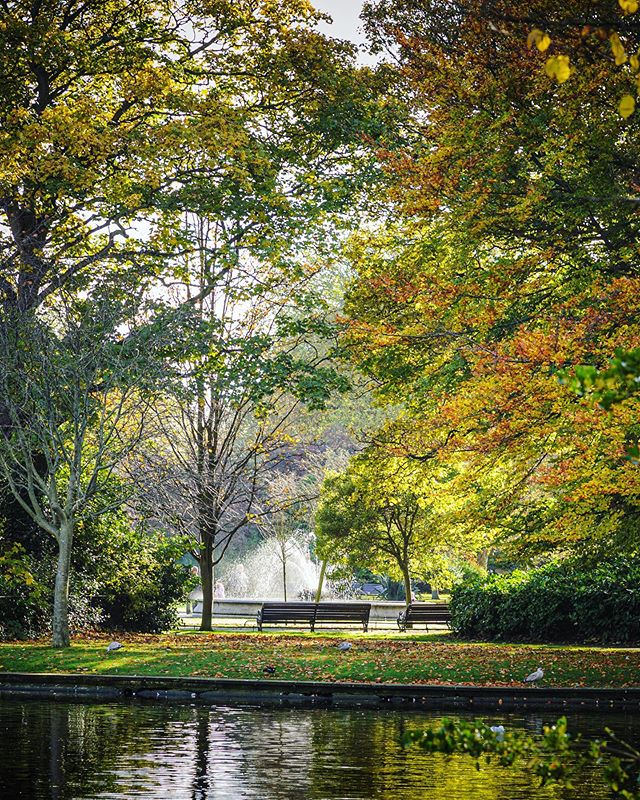 Another Autumn day in Stephen's Green  #autumn #autumnvibes🍁 #autumncoors🍁 #fall #fallcolor #discoverdublin #visitireland #visitdublin #documentdublin #dublin #dublinstreets #visitireland #visitdublin #lovedublin #lovindublin #loveireland #cityscape #streetsofdublin