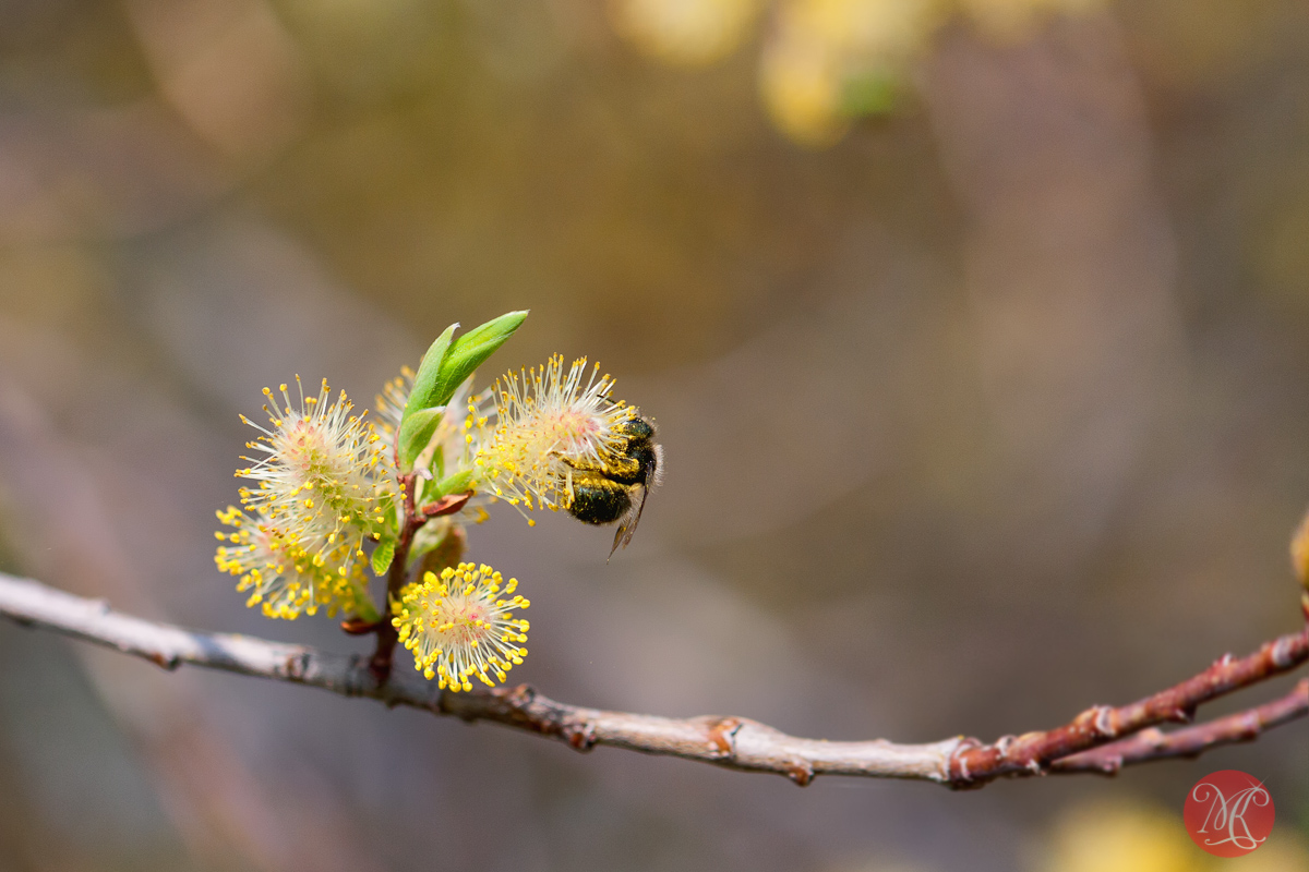 canon,100mm,macro,spring,nature,foliage, blossom,abstract,color, beauty,bee,insect