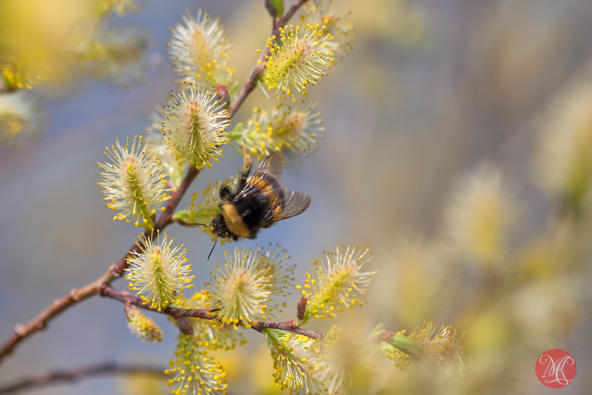 canon,100mm,macro,spring,nature,foliage, blossom,abstract,color, beauty,bee, insect