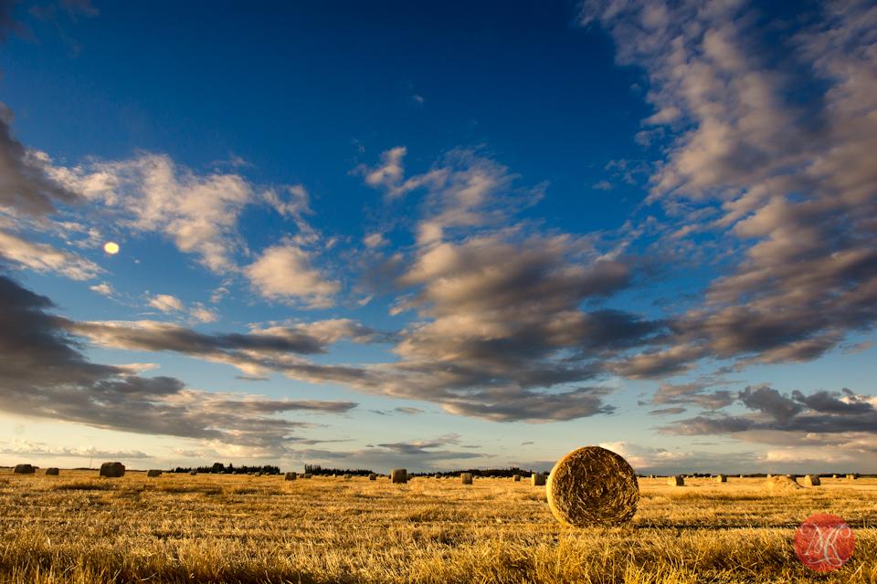 prairies-1.jpg
