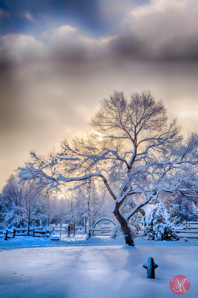 2-winter-wonderland-canada-alberta-edmonton-park-cold-snow-morning-beauty-landscape-mist-fog-light-nature.jpg