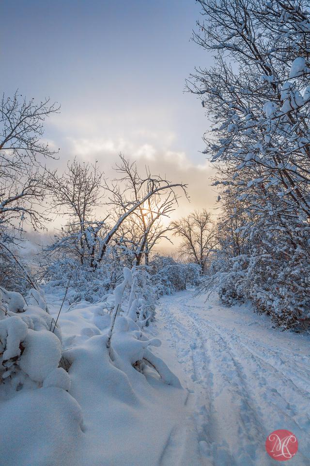3a-canada-alberta-winter-morning-fog-beauty-snow-light-landscape.jpg