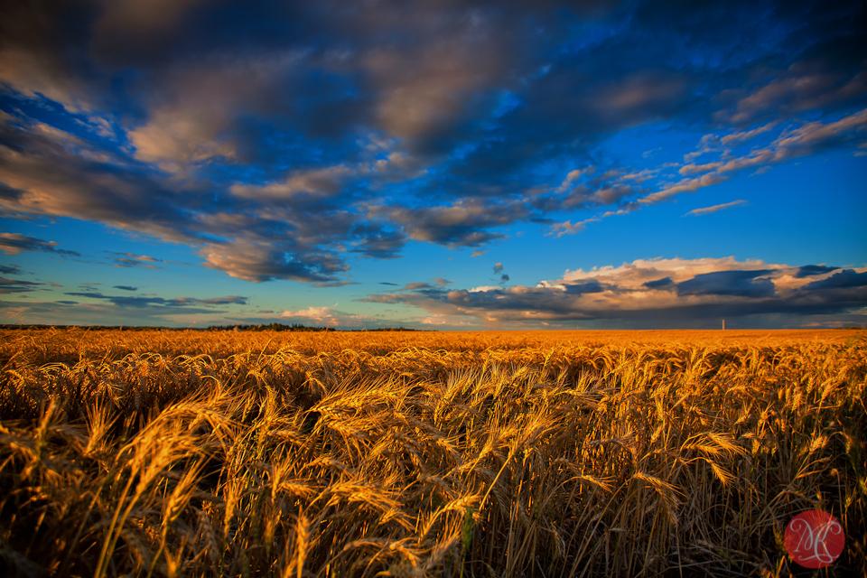 3-canada-alberta-fall-harvest-fields-landscape-sky-clouds-wheat.jpg