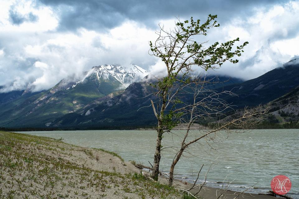 3-lake-jasper-tree-mountain-landscape-alberta.jpg