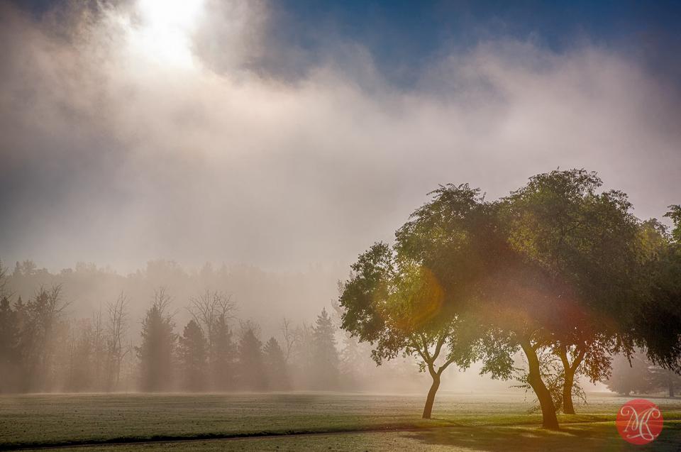 7-canada-alberta-edmonton-fall-mist-fog-park-trees-mood-beauty.jpg