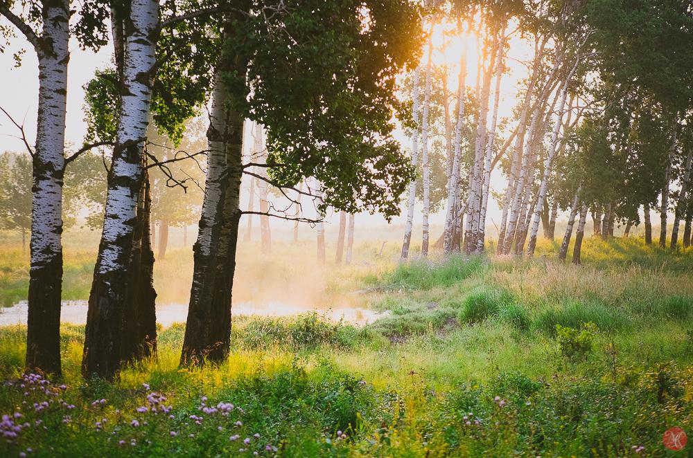sun peaking through trees at Elk Island National Park