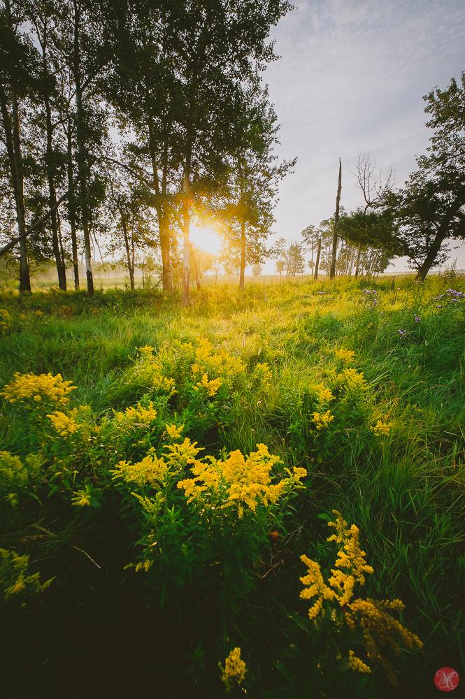 Sunrise at Elk Island National Park