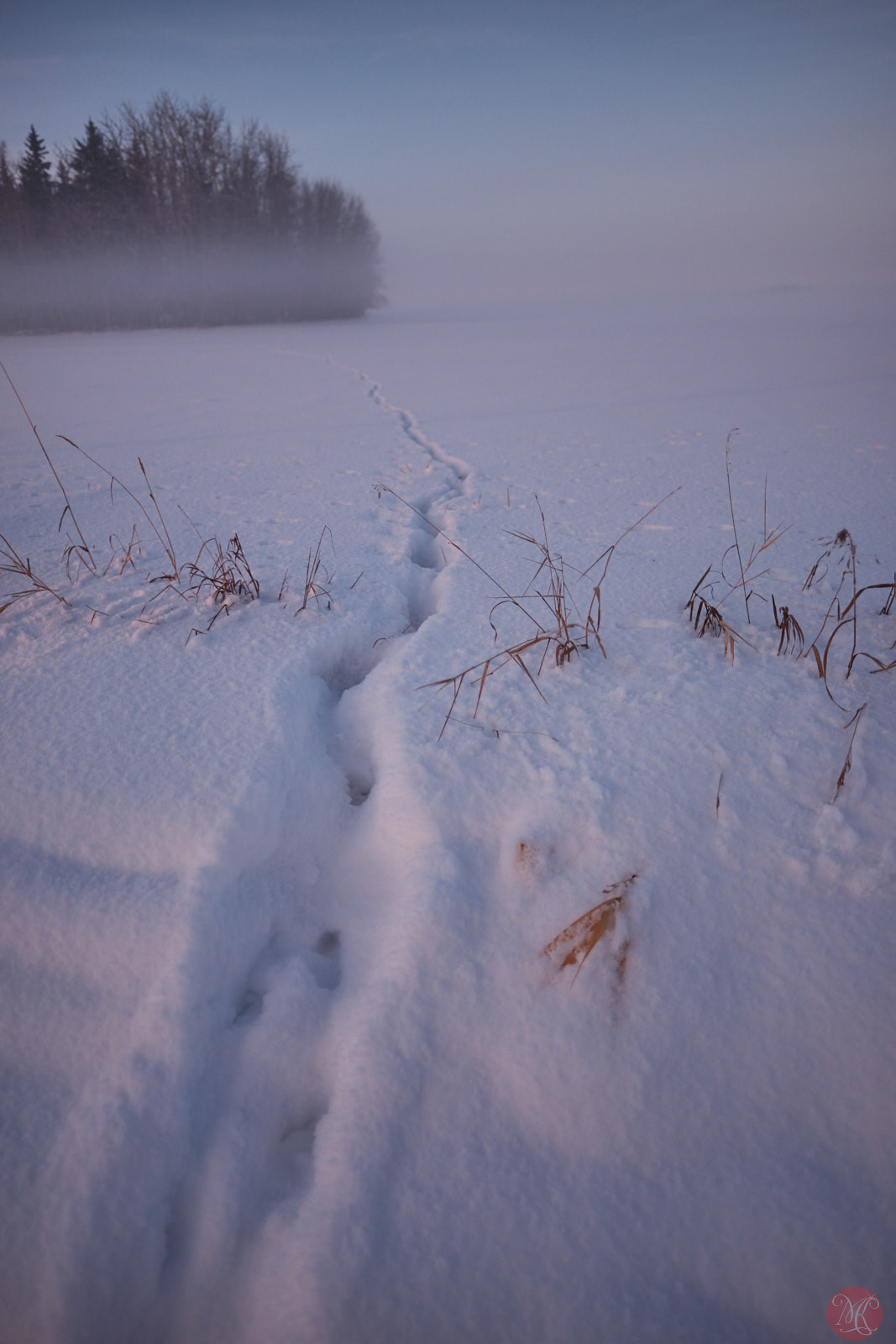 Animal tracks in the snow rural Alberta