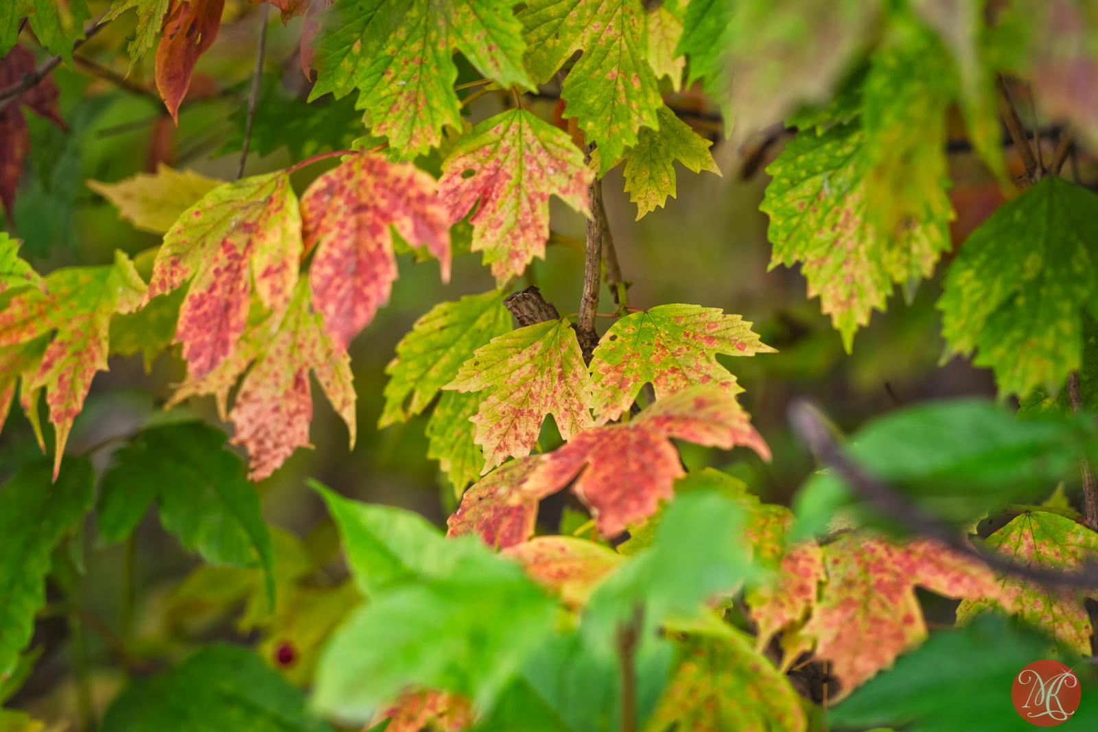 Fall at the park 3