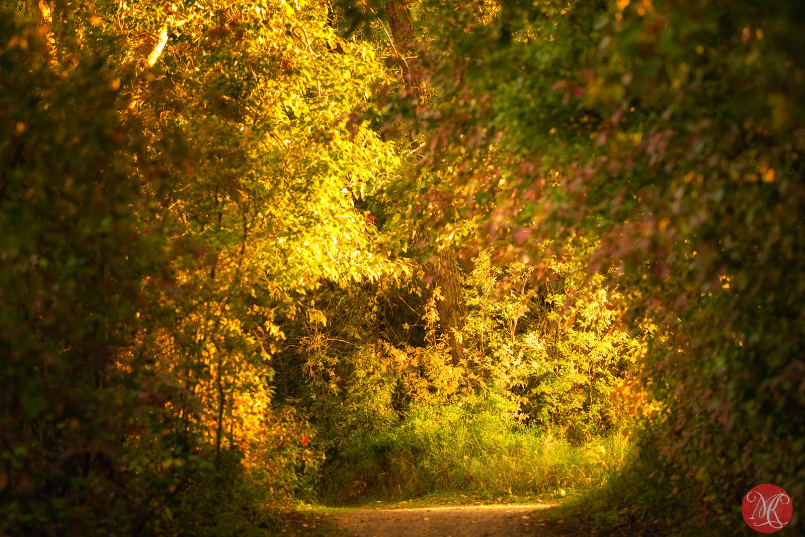 Fall at the park 6