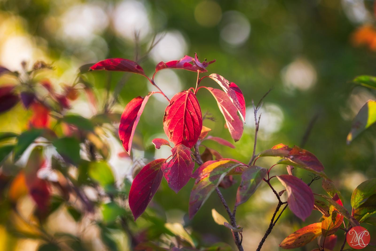 Fall at the park 1