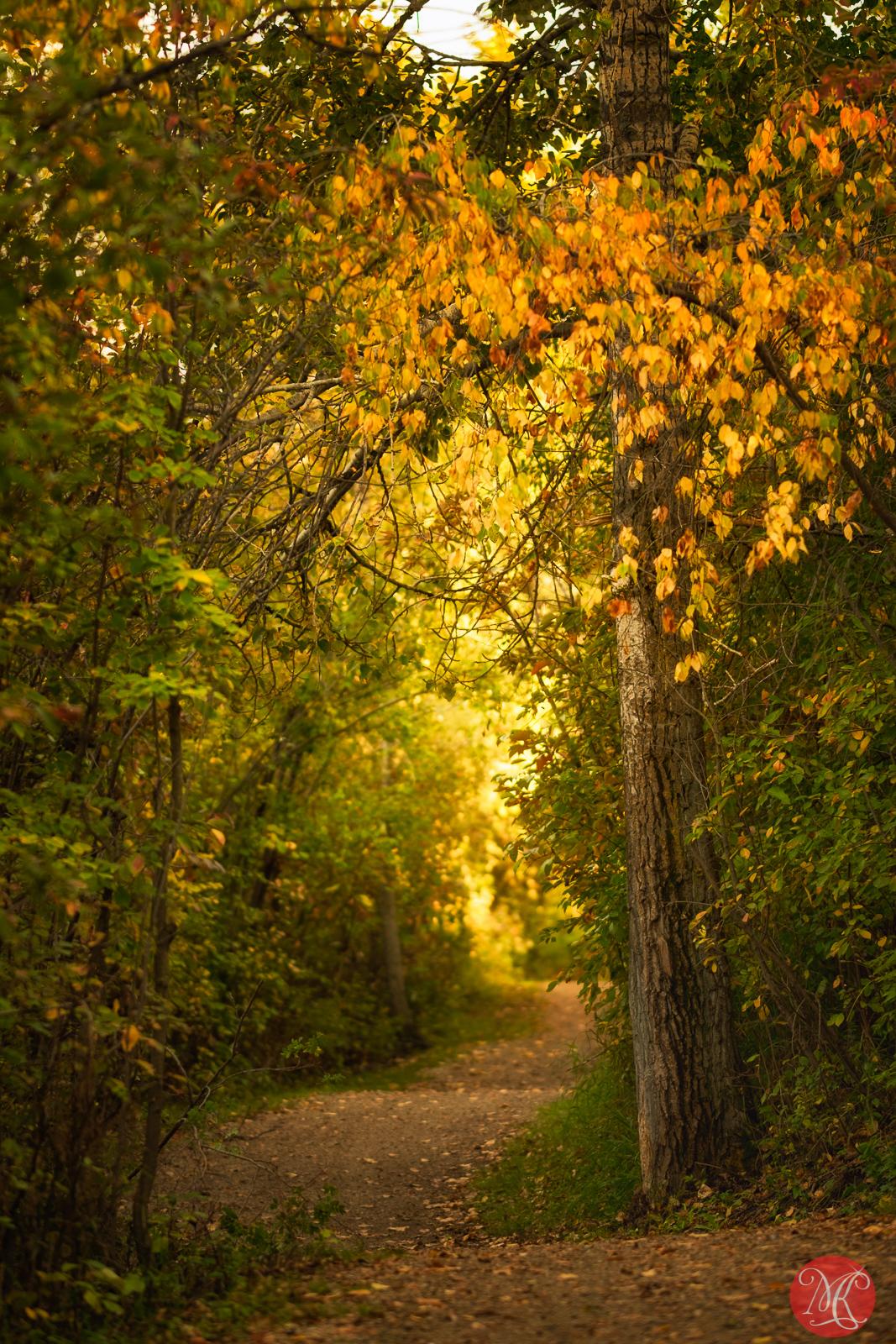 Fall at the park 4
