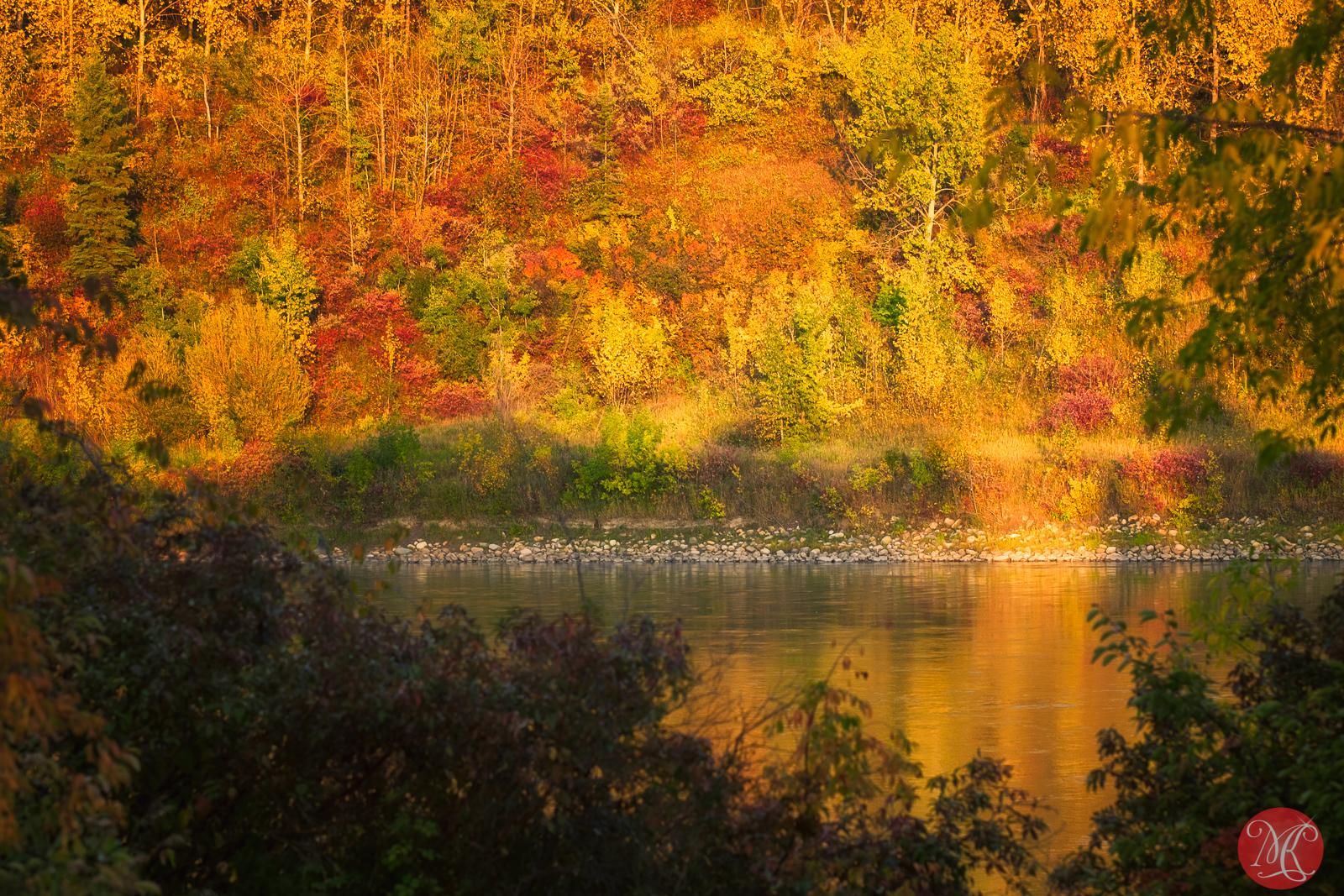 Fall at the park 11