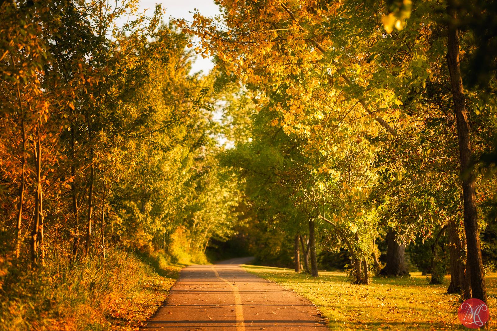 Fall at the park 9