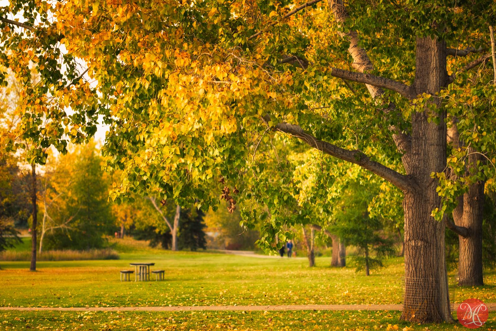 Fall at the park 14