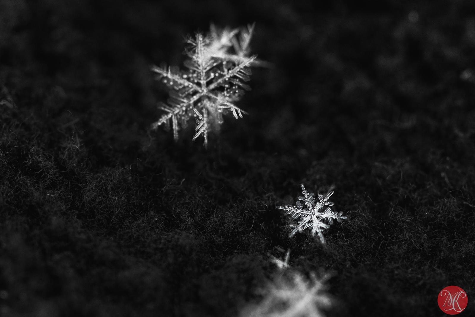 Fresh snow 5