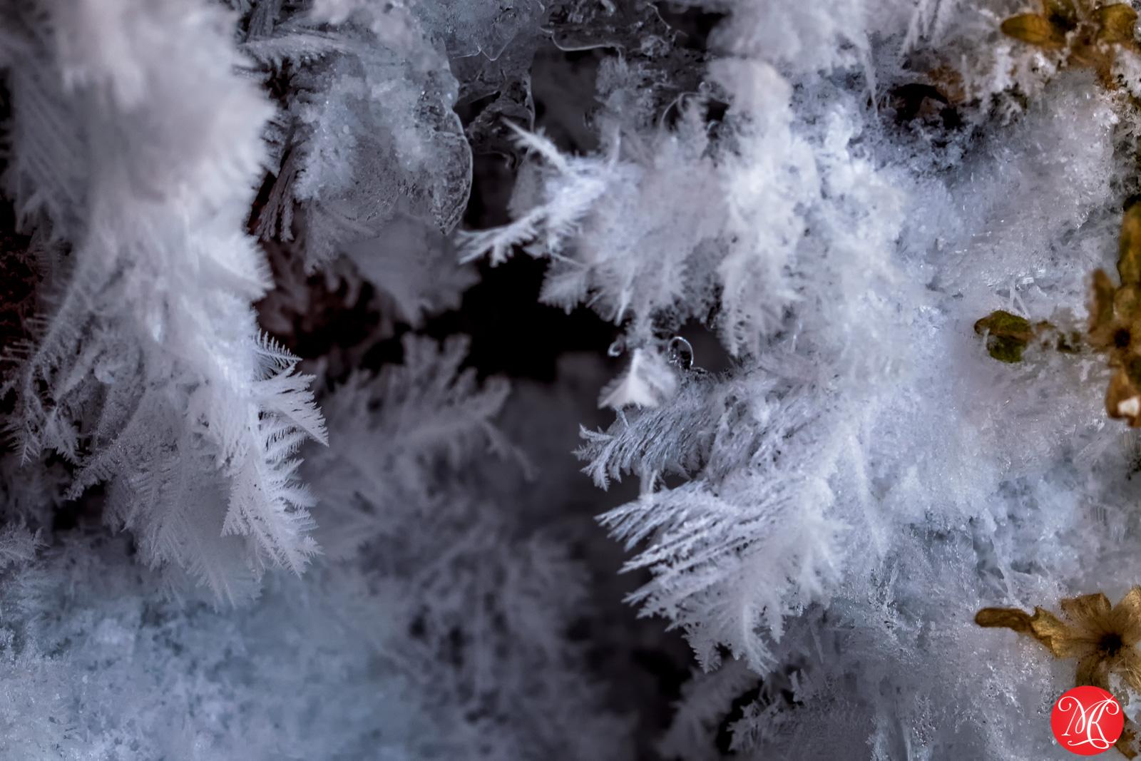 Frozen world 9