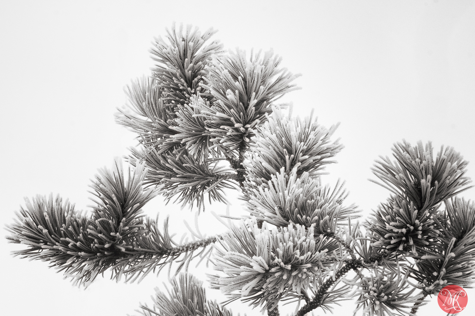 Frost covered 2
