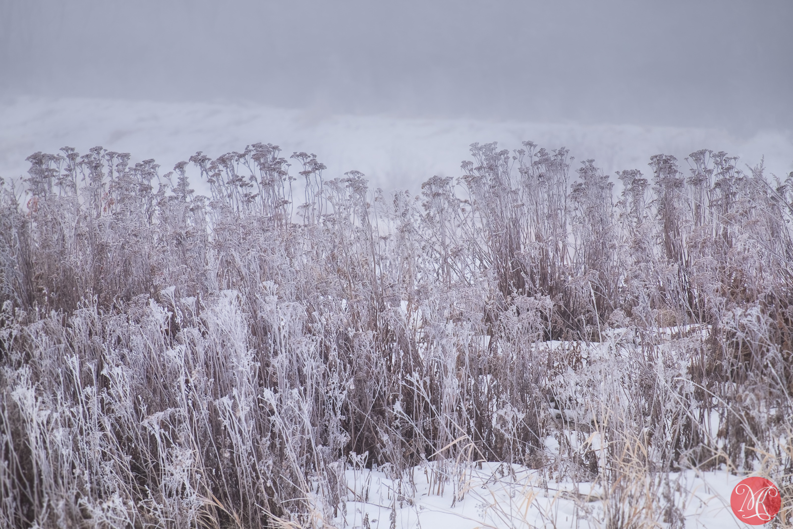 Frost covered 4