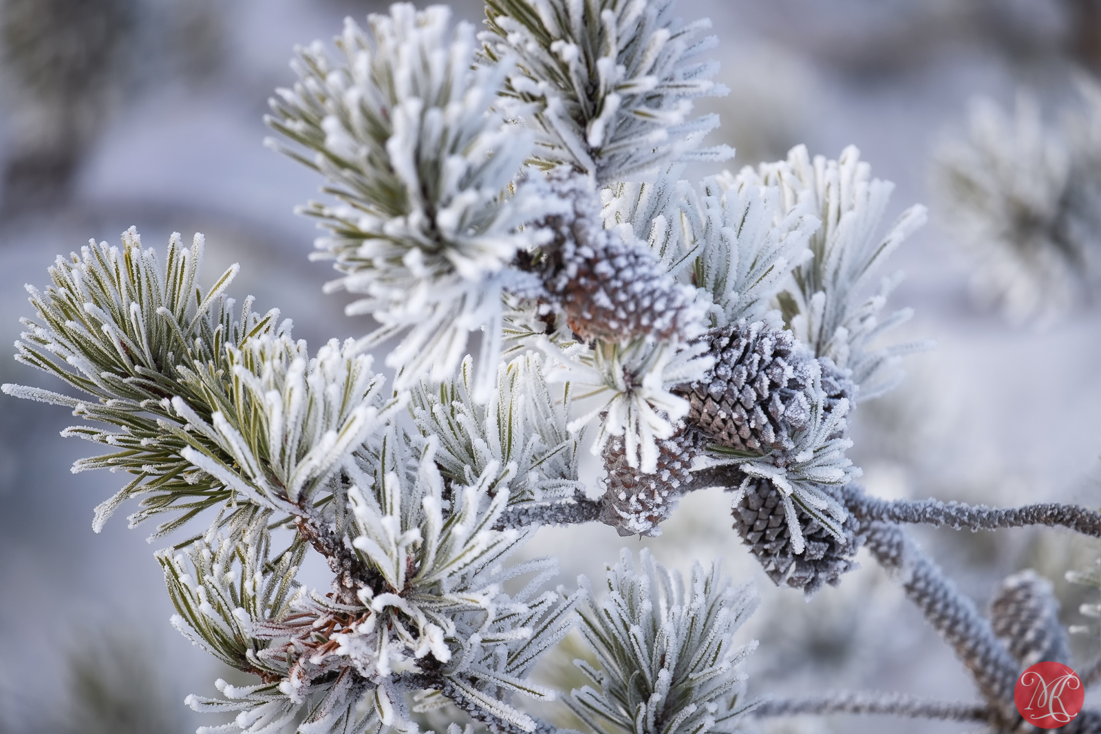 Frost covered