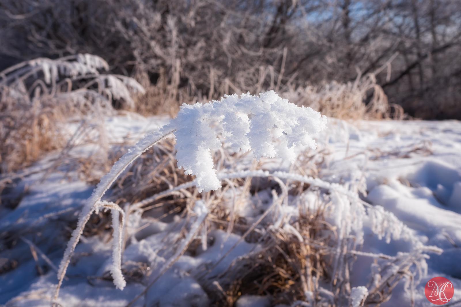Heavy winter frost
